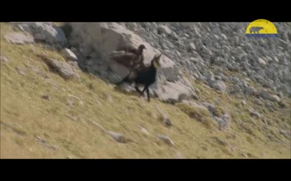 The Best of Eagle Attacks On Human & Animal _ Most Amazing Wild Animal Fights ✓